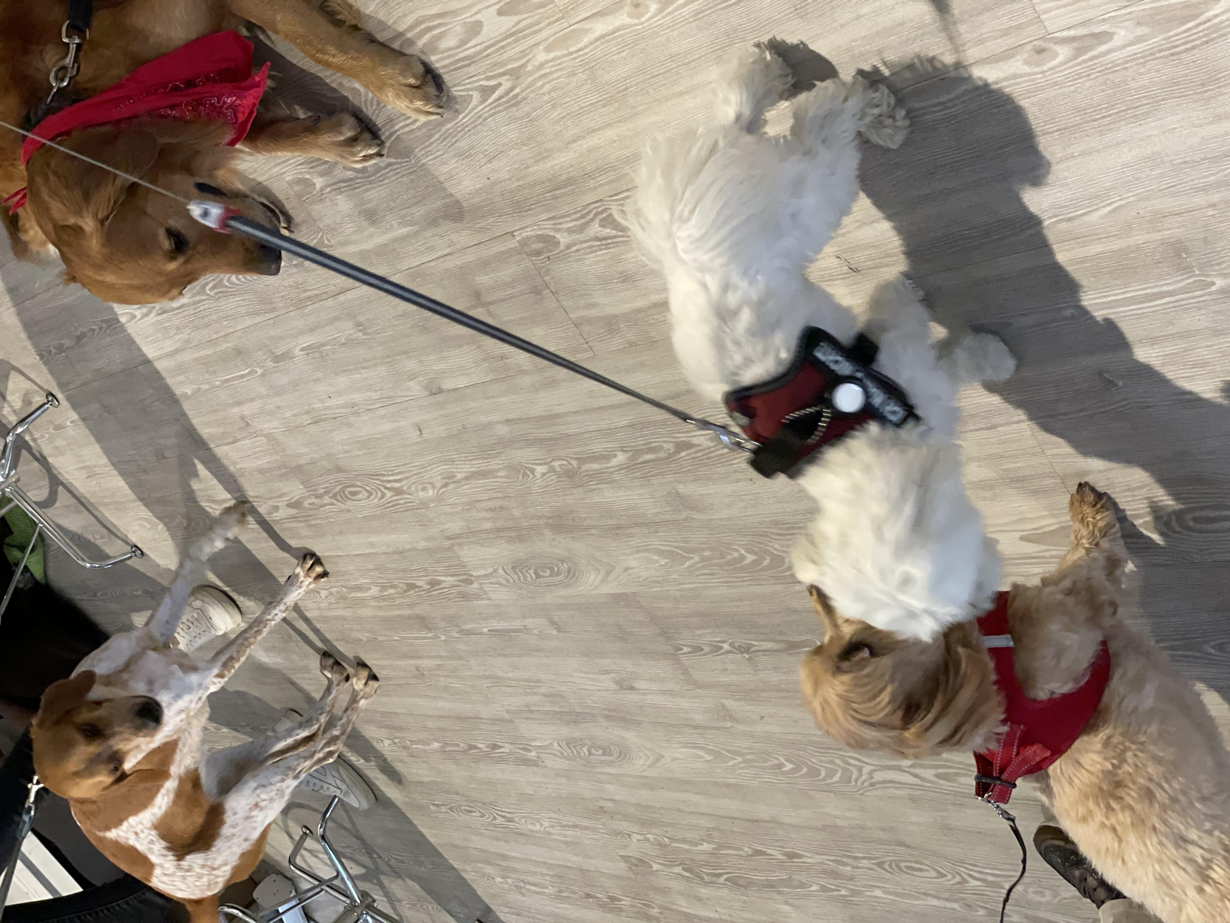 Hunde-Gaeste-2